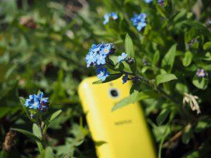 Niebieskie kwiatki I Nokia - ekologia i przyroda